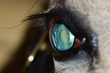Equine Cataract Surgery